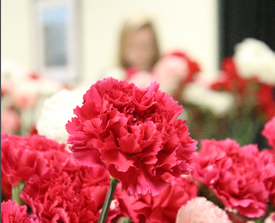 A tradition for South High's Student Council includes selling and delivering carnations every year. These flowers come in pink, red, and white.