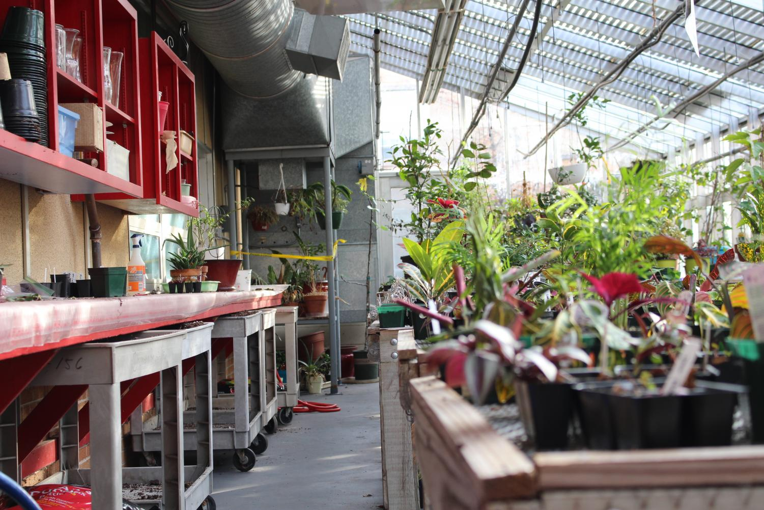 Sheboygan South's greenhouse, a place where students grow and learn to take care of their own plants.